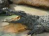 la ferme aux crocodiles (à160km, et 1h40 de route)