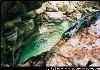Les gorges du Furon (à 57 km)